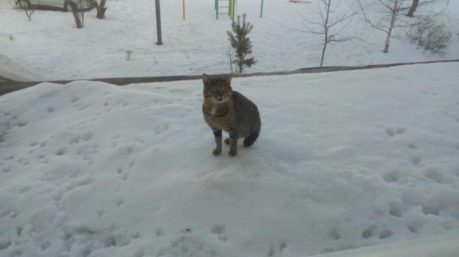Чем обернулось спасение кота