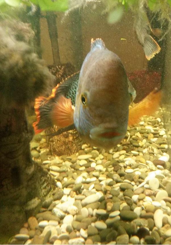 рыб болела