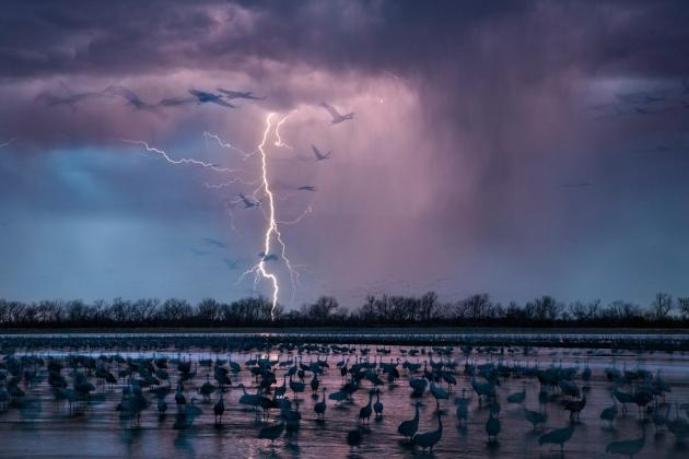 Striking Cranes.jpg