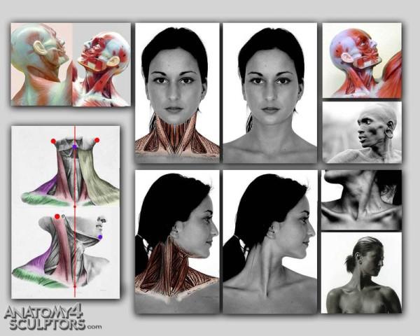 m_338844_anatomy