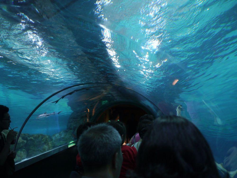 Сеул аквариум 2