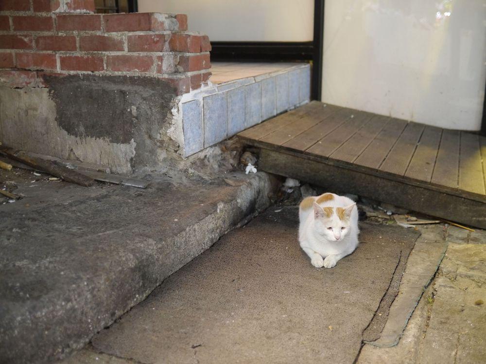 Пусан кот 1