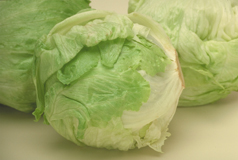 26_Iceberg_Lettuce