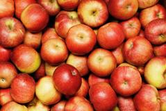 15_Apples_1