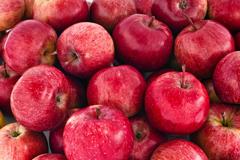 19_Apples_2