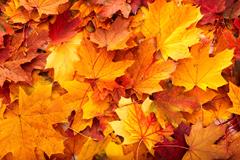 01_Leaves