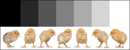 01_Chicken_7
