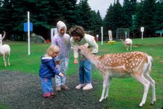 16_Deer