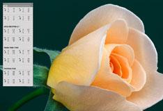13d_Rose_Lab