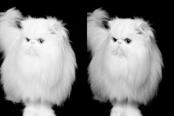20_White_Cat
