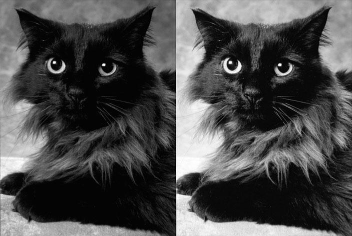22_Black_Cat