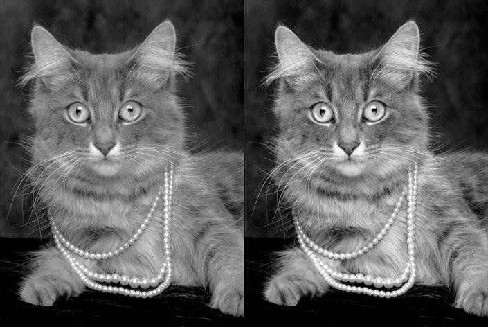 24_Gray_Cat