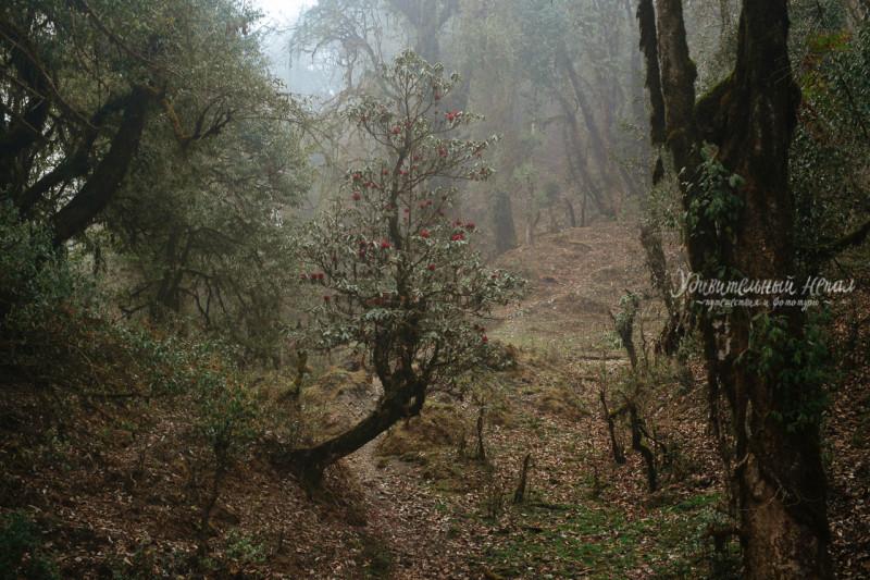 20170328-Nepal-9days-trekking-ARZH2007E_web.jpg