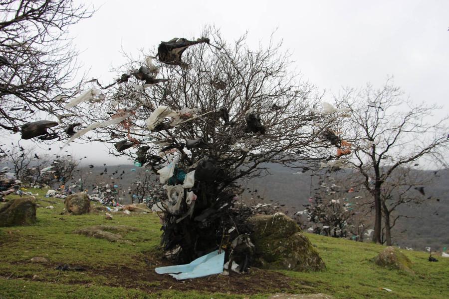 2 км от мусорки Махачкалы 8 марта 2015