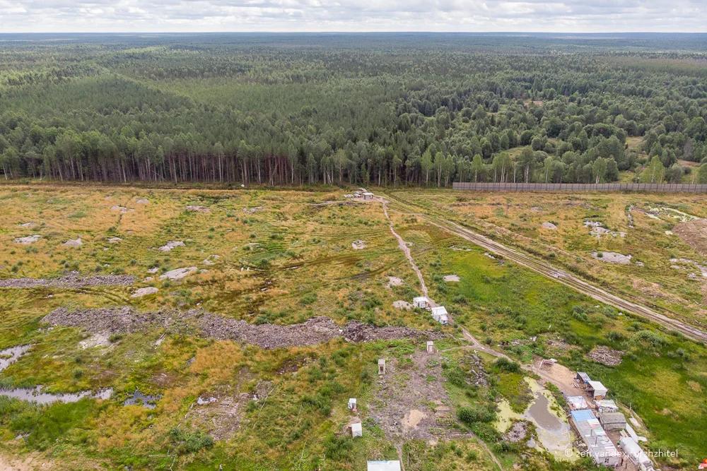 Часть леса в Шиесе вырубили под строительство мусорного полигона. Лесу, который стоит за забором была уготована такая же судьба