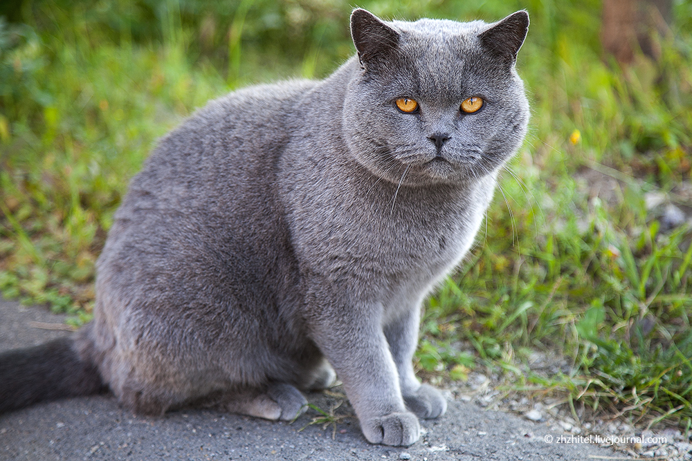Магический кот следит за тобой!