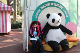 One giant panda...