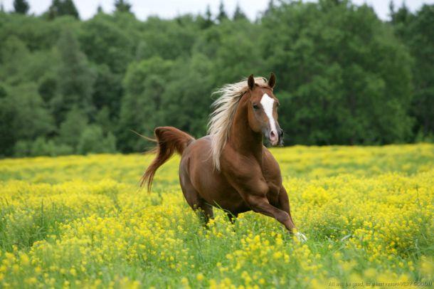 http://ic.pics.livejournal.com/zima81/14990079/7580/original.jpg