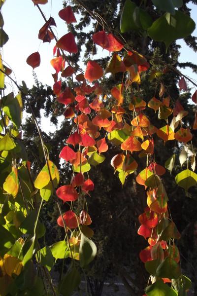 Осень  в Иерусалиме