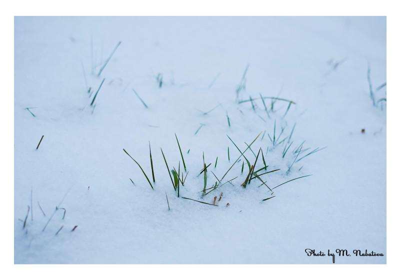 зима5.jpg