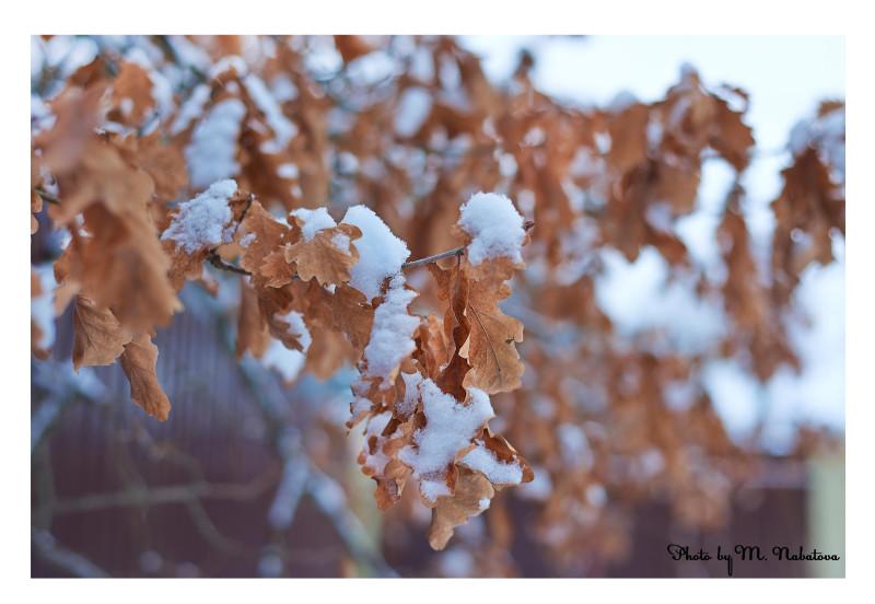 зима9.jpg