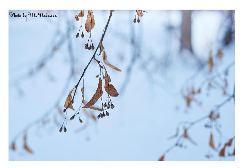 зима10.jpg