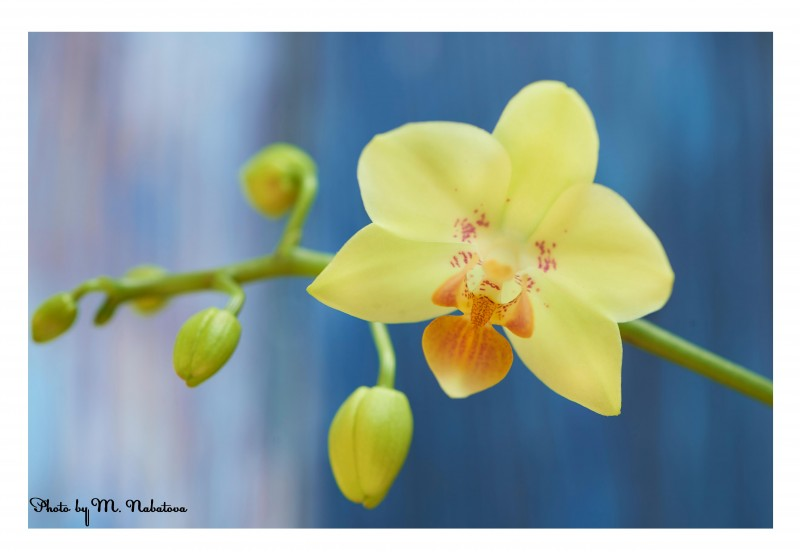 орхидея5.jpg
