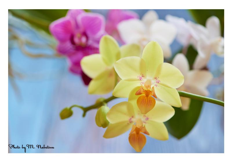 орхидеи2.jpg