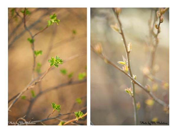 весна.jpg