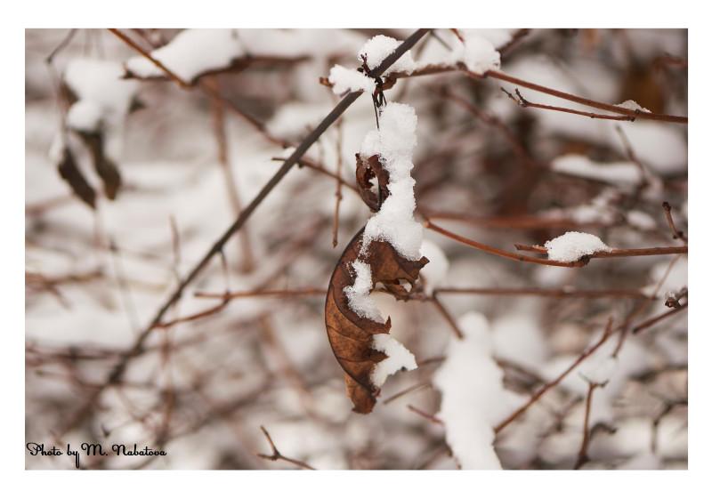 зима6.jpg