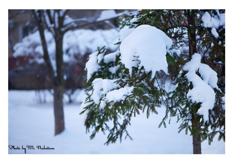 зима13.jpg