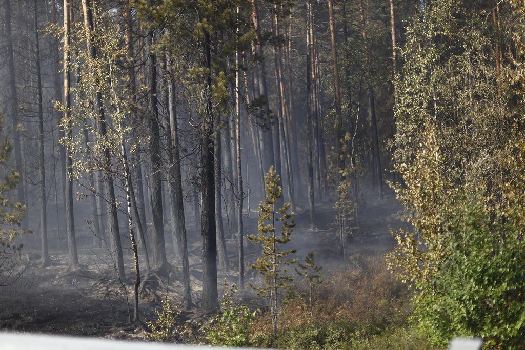 #лесные_пожары_2012