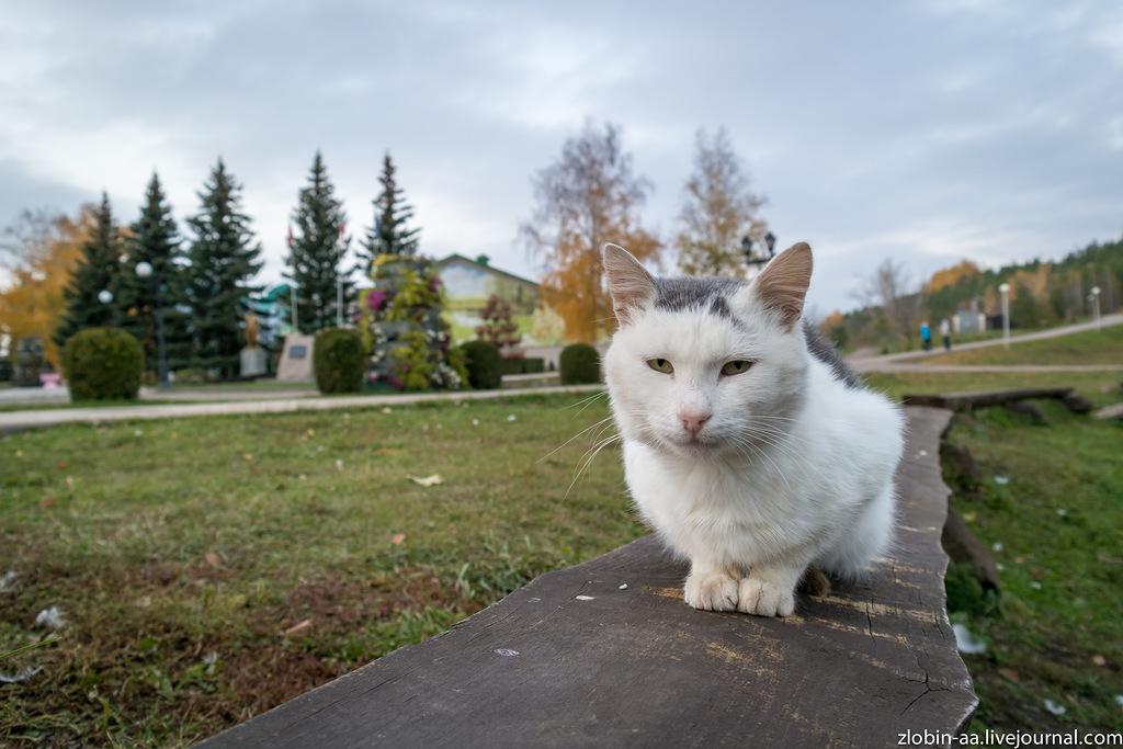 Котики из Татарстана