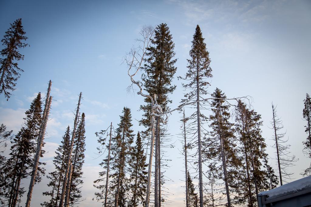 Самое кривое дерево, что я видел :-)