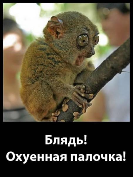 долгопят-охуенная-палочка-песочница-433075