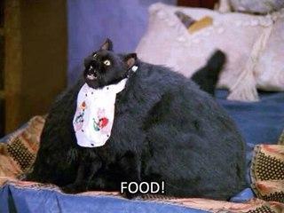 Сейлем кот сериал