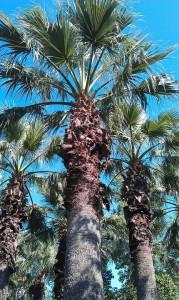 фото СКК Знание - пальмы