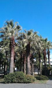 фото СКК Знание - пальмы 2