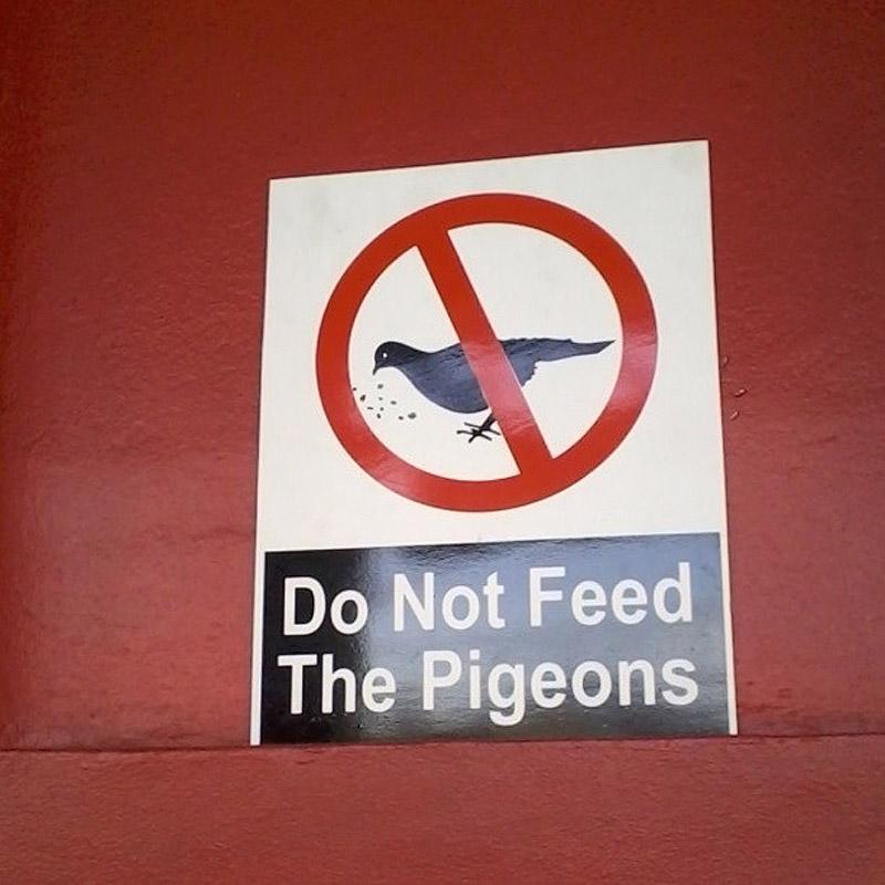 Не кормите голубей