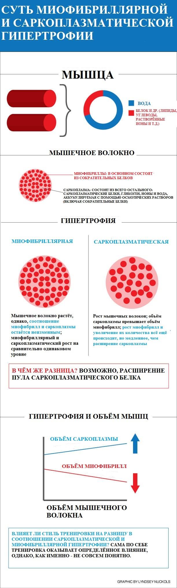 Саркоплазма