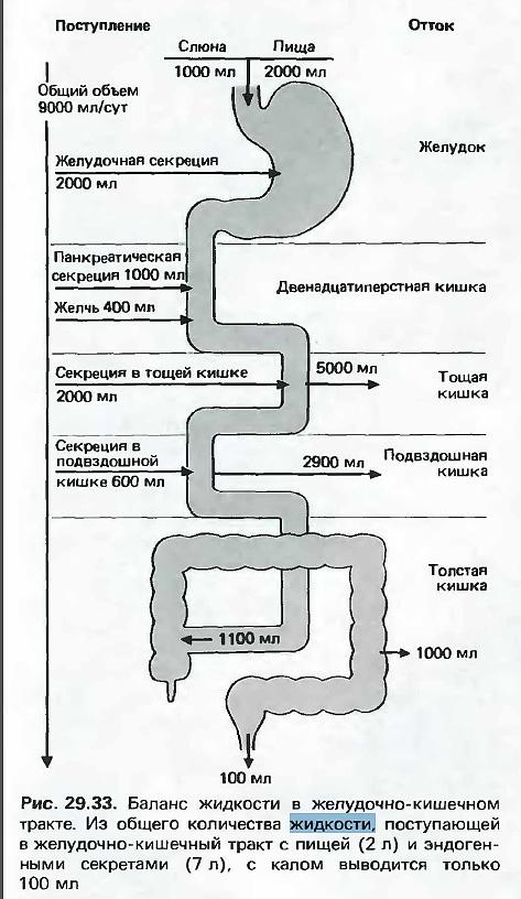 Транспорт-воды-в-ЖКТ