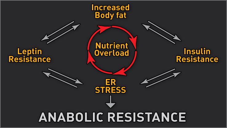 Anabolic-resistance-chart[1]
