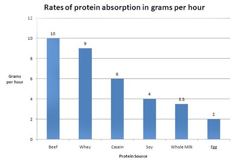 protein-absorption[1]