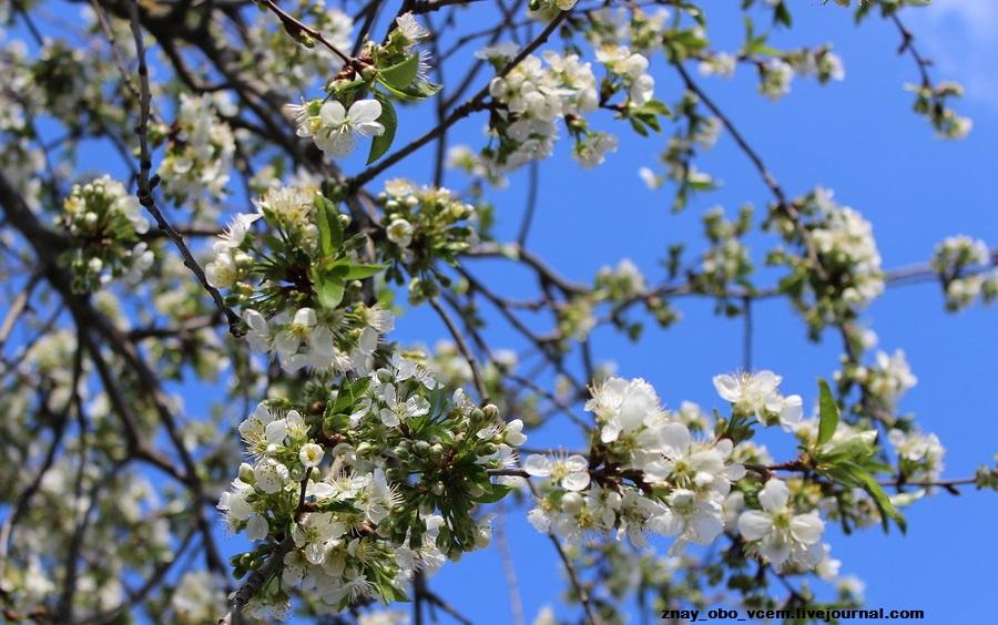 Доброе утро,фото,цветы,деревья,весна