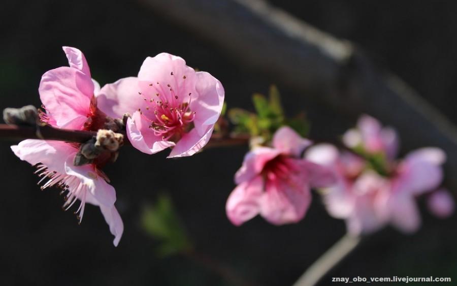 Доброе утро! Нежной весны!