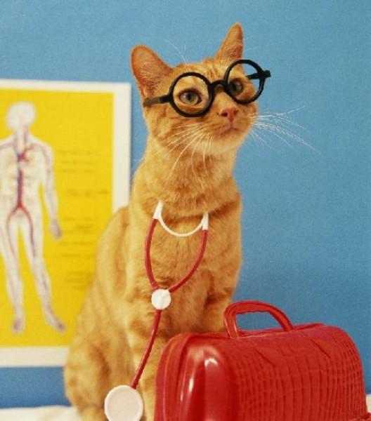 Доктор Кошка