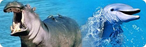 Неожиданные родственники в мире животных