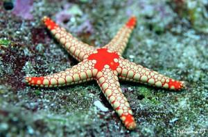 Морской гороскоп