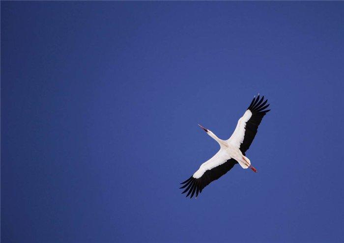Саранчовая птица, приносящая счастье