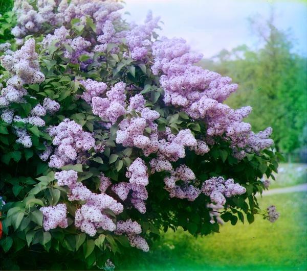 Магическая сила растений. Кустарники